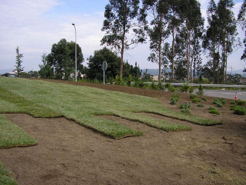 Parques 4